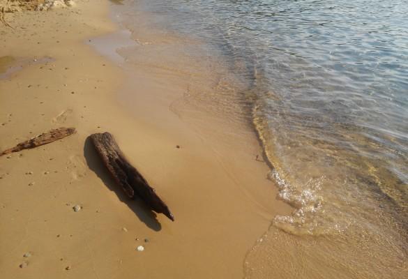 Plaža Mandraki Skiatos Grčka Slika 6